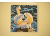 New swan canvas print never used