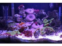 Marine Tank 55 LTR With Everything
