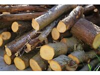 Several tonnes of cut wood - Crafts / Firewood / Building / Garden Decoration