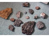 FREE-Collection of Fossils
