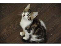 Lovely kittens ready for new homes