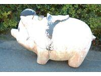 fairground pig