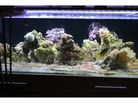 Live rock. Over 2 years in an established tank, £5 per kg