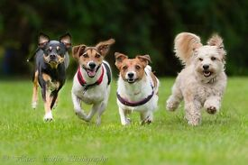 """Kate's K9's """"At Your Dog Walking Service"""""""