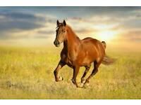 Horses for loan/sharer