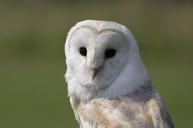 LOCAL FUNDRAISER (WILDLIFE CHARITY) Generous commission only or £7.60 ph + bonuses. P/T – Temp/Perm