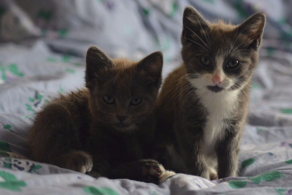 awesome kittens!