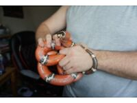 Male Sinaloan Milk Snake with complete setup