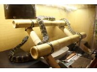 IJxCoastal Carpet Python // Snake