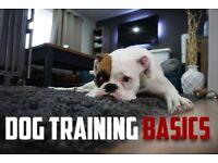 Dog Training Basics - ebook