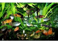 large collection of tropical fish