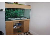 LARGE AQUARIUM SET UP