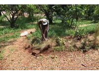 Gardener worker