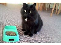 MATURE EXPERIENCED ANIMAL LOVER OFFERS CAT FEEDING/DOG WALKING/SMALL ANIMAL CARE. PL5, PL4 & PL2