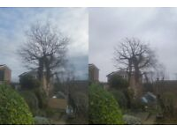 J. Wallwork & Co. - Quality Tree Surgery and Gardening - Insured and Qualified Tree Surgeon/Gardener