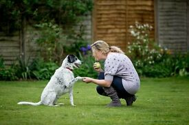 Dog Fosterers Needed in North East England