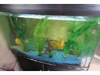 """Good sized fish tank Aqua One 32"""" x 23"""" high (inc. light/filter box) x 18"""" width."""