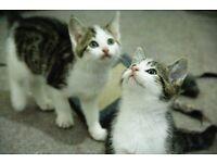 Adborable kittens for new homes