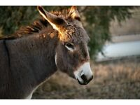 Endangered Mallorcan Donkeys Sanctuary FUNDRAISER