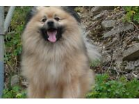 ALANS Dog Walking & Pet Sitting Services - Dog Walking UK