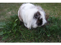 Bunny with Outdoor Rabbit Wooden Pet House Garden Cage and Food