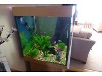 Amazon cube 240 litre aquarium