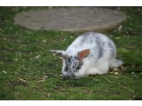 Stunning baby rabbits