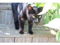 Missing Cat - Thorpe St Andrew, Norwich