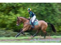 Part Time Groom required for private event yard in Thursley, Surrey.