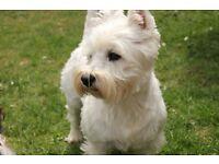 Dog Walker, Pet Sitter, Animal Carer and Pet Taxi Services