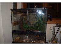 Crested Gecko and set up
