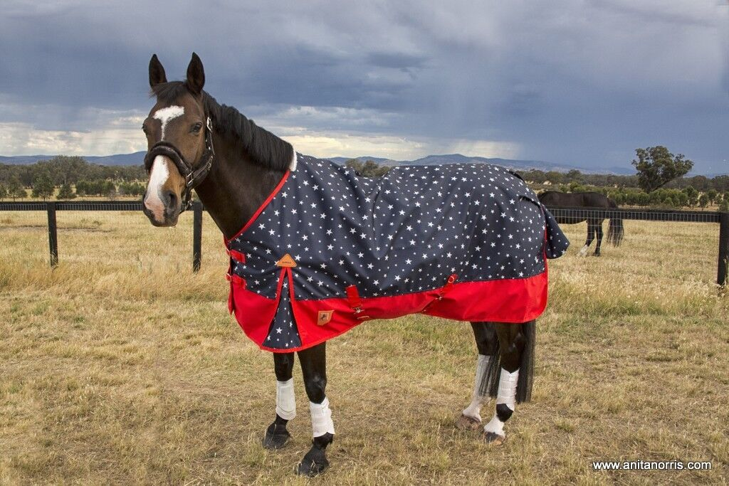 Details About Capriole Navy Red Stars 600d Winter Waterproof Turnout Horse Rug Rainsheet