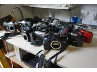 Collection of film cameras