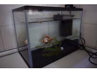 Small fish tank / aquarium