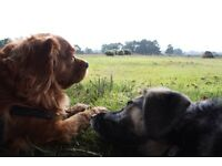 Reliable, trained and experienced dog walker in the new forest and waterside area