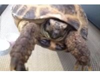2 horsefield tortoise and home lights etc