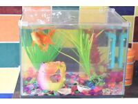 beautiful aquarium fish+aquarium+decoration+ 1 month food+oxygen pomp+water solution, just for £50