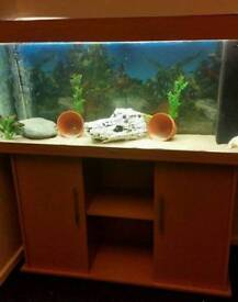 JEWEL RIO 180 LITRE FISHTANK WITH BRAND NEW CABINET