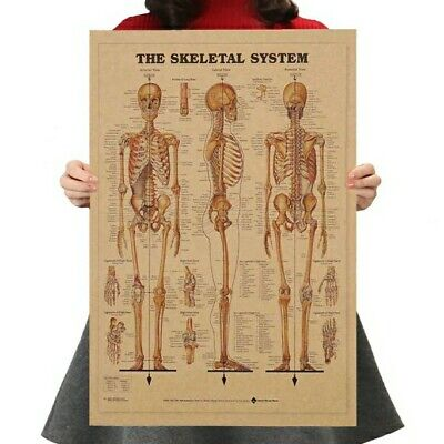 Anatomical Chart Human Skeletal System Poster Anatomy Medical Education 4230cm
