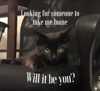 2 adorable cats- 1yr old & 6 month old -Looking for you!