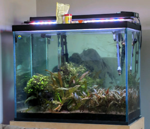 85 gallon aquarium full set up