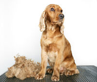 Professional Pet Grooming in Lockport