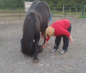 The Horse Medicine Collective Needs Your Help Peterborough Peterborough Area image 9