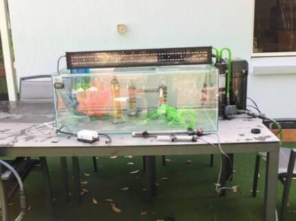 Complete Aquarium Set Up Point Clare Gosford Area Preview