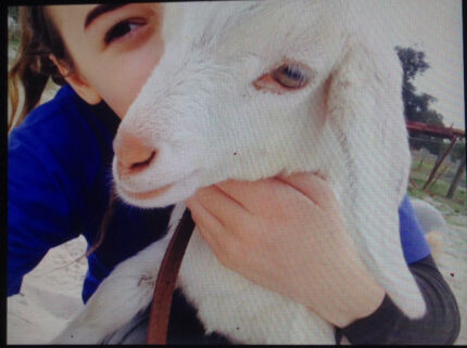 baby goat missing! please help :(  Henley Brook Swan Area Preview