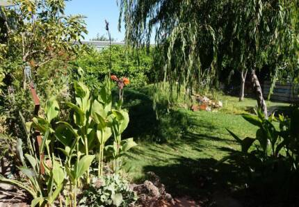 Backpacker with gardening expertise Largs North Port Adelaide Area Preview