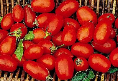 Tomato Seeds, Roma VF, Non-Gmo Heirloom Tomato Seeds, For Italian Sauces, 50ct