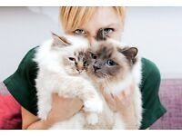 CAT SITTING SERVICES IN NORTH WEST AND CENTRAL LONDON