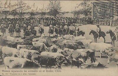 Chile Huasos Separando Los Animales En El Rodeo Ed  Allan N  155