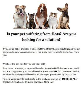 DOG GOT FLEAS? FREE TREATMENT + $100 voucher Tallai Gold Coast City Preview
